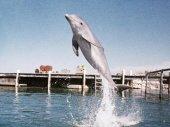 A delfin napja kép
